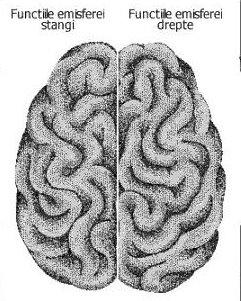 creier-2.jpg