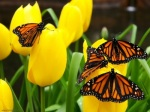 butterflies_on_flower_800x600