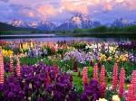 field-of-flowers-02