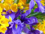 yellow-and-purple-flowers-5c